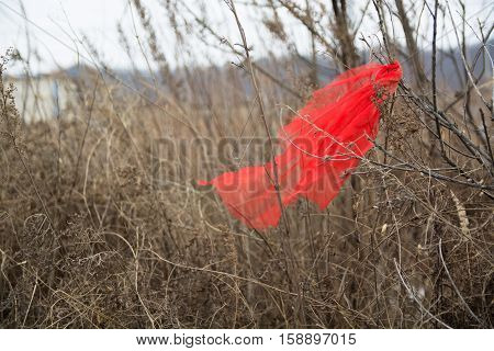 Piece of red fabric hanging on the branch. Autumn nature.