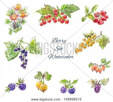 Watercolor berries set blackberries currants gooseberries cloudberries lingonberries. Isolated
