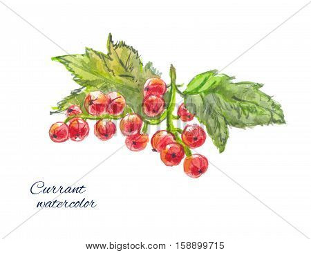 redcurrants watercolor sketch, isolated on white background