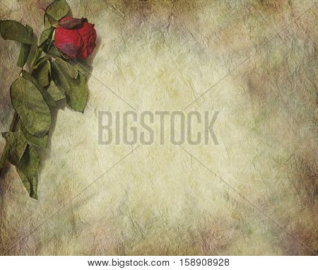 Symbolic withered grunge rose border - dried red rose laying in top left corner of stone effect rustic grunge background with plenty of copy space