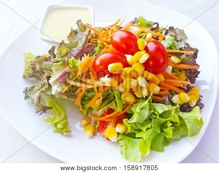 Closeup of Fresh vegetable salad in plate.