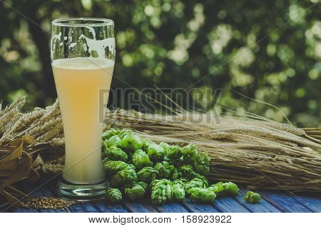large glass of light unfiltered beer malt hops barley ears standing on an old wooden table dyeing natural background