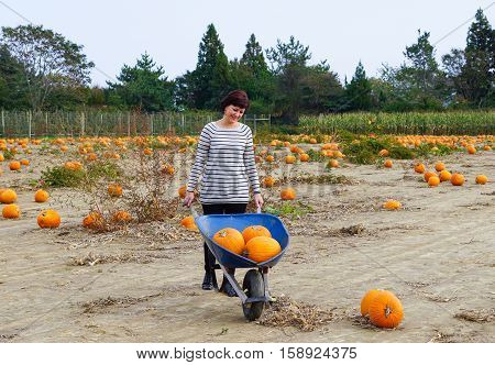 Middle-aged woman at pumpkin patch selecting pumpkins.