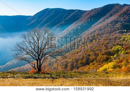 alone tree on mountain meadow in sunny autumn day