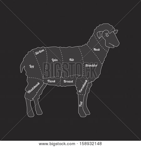 Lamb Meat Schematic View Thin Line Farm Animal on a Dark Background. Vector illustration