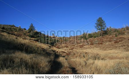 Dirt road in the Laguna Mountains, San Diego County, CA