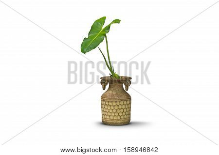 green plants in pottery clay vase decorate interior isolated on white clipping path