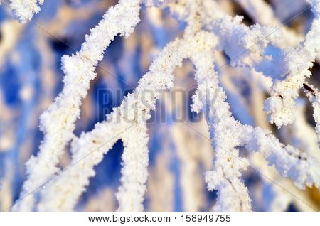 branch covered with frosty rime. winter macro picture. frosty winter sunny day. Beauty! texture winter background