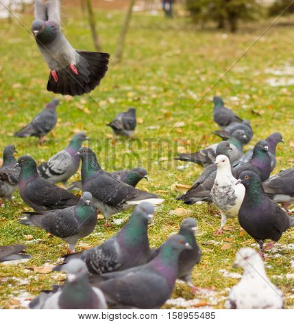 Urban birds in the park in winter. our feathered friends they are very fun and interesting