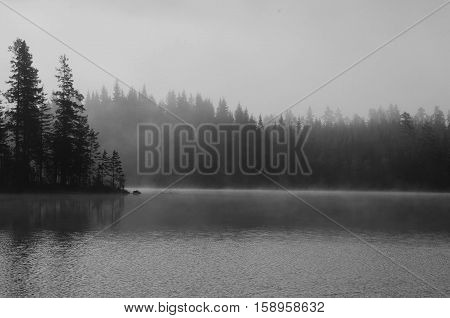Forest and lake with morning haze above surface poster
