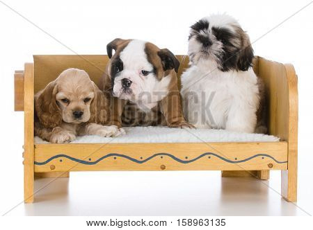 three different breeds of puppies sitting on a wooden bench