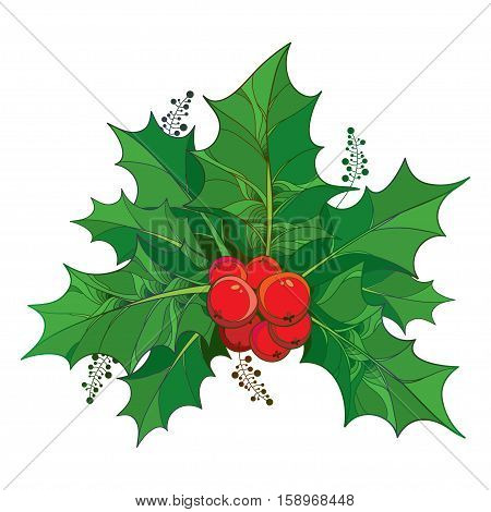 Vector twig with outline green leaves and red berries of Ilex or European Holly isolated on white background. Traditional Christmas and Happy New Year symbol in contour style for winter design.