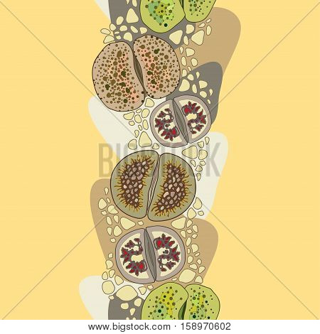Vector seamless pattern with variety Lithops on the beige background with pebbles. Floral background in contour style with succulents for summer design. Series of different succulent plants