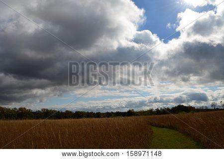 A trail through the prairie landscape during summer