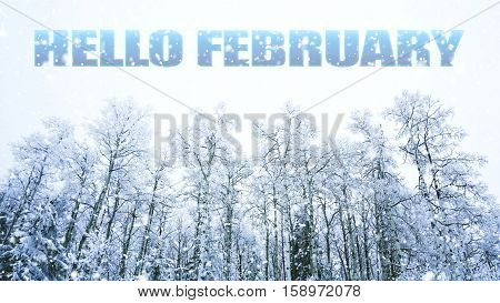 words Hello February on winter trees with snow background