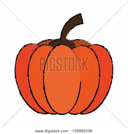 drawing pumpkin harvest bittersweet vegetable icon vector illustration eps 10