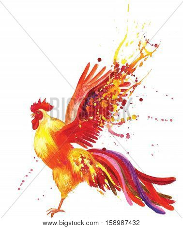 Gorgeous yellow-orange fiery rooster flaps its wings fluttering behind long tail feathers