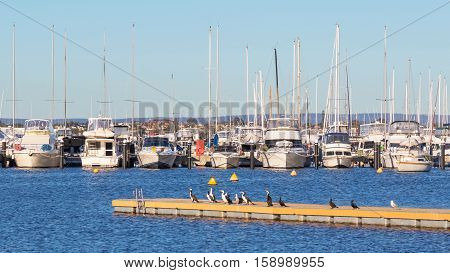 Boats lined up at their moorings in the Swan River in Perth, Western Australia, with cormorants resting in the foreground.