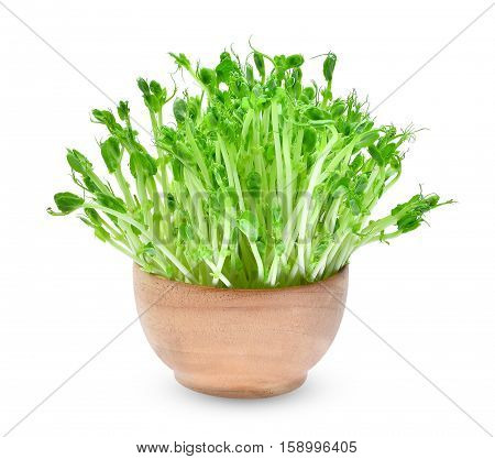 fresh snow pea sprouts in wooden bowl isolated on white background