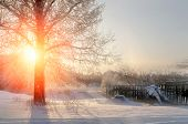 Winter sunset landscape with the frosty winter trees and sunlight beams -winter landscape scene. Winter rural landscape in cold sunset. Winter landscape with nature covered with snow at winter sunset poster