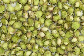 unripe green hazelnuts lies on white table