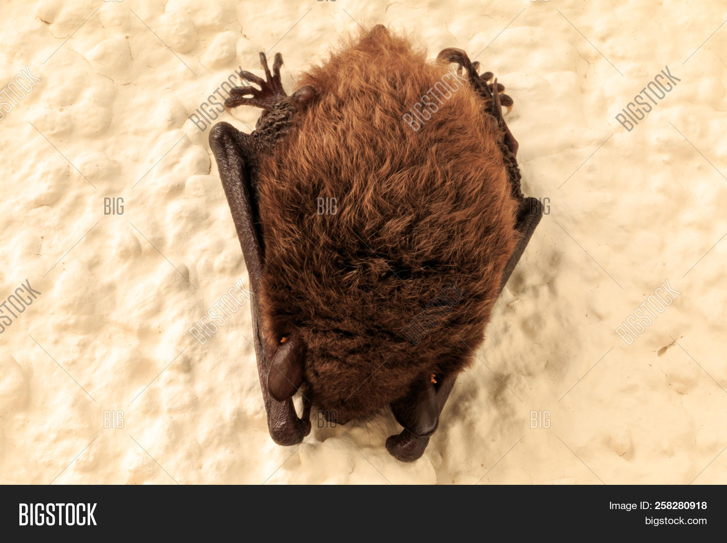 Bat Sleeps On A House Wall Of An Apartment Building The Was Hanging Near
