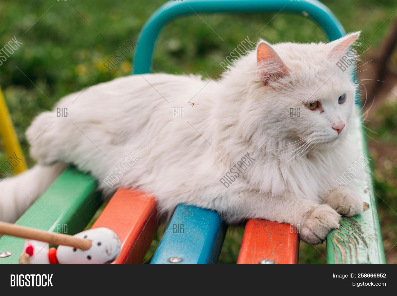 Cute White Kitten Image Photo Free Trial Bigstock