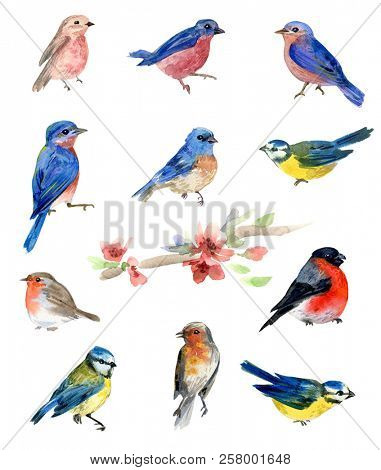 Watercolor birds, collection of isolated illustrations