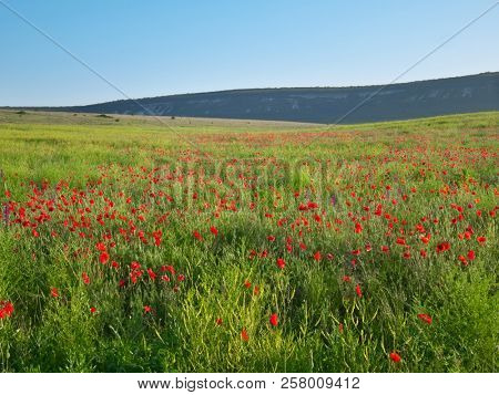 Spring flowers  in meadow. Beautiful nature andscapes.