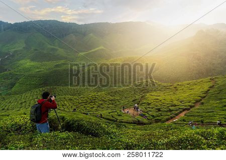 Young Asian Photographer Traveling Into Tea Fields With Mist. Young Man Traveler Take A Photo Of Mou