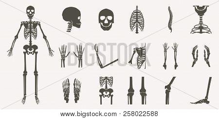 Human Bones Orthopedic And Skeleton Silhouette Collection Set On White Background, Bone X-ray Image