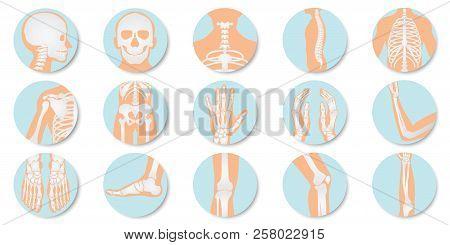 Orthopedic And Skeleton Icon Set On White Background, Bone X-ray Image Of Human Joints, Anatomy Skel