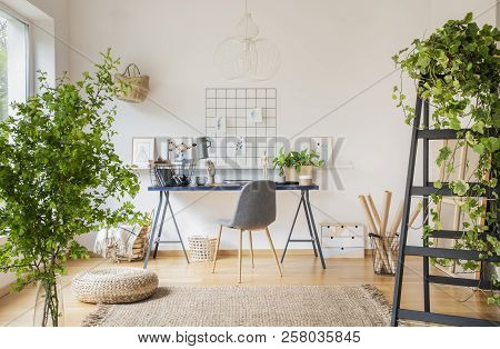Plants In White Spacious Home Office Interior With Pouf On Carpet Near Grey Chair At Desk. Real Phot