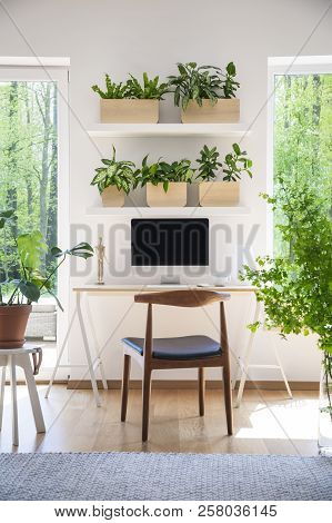 Shelves With Fresh Plants Hanging Above Wooden Desk With Empty Screen Monitor In Real Photo Of White