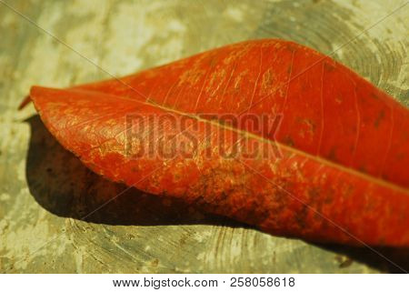 Bright Orange Leaf On Ground. Fallen Leaf Closeup. Autumn Season Nature Detail. Fall Seasonal Backgr