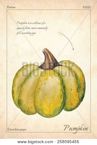 Gourd, Pumpkin Vector Illustration. Green Isolated Gourd, Pumpkin Vector Illustration For Menu, Prin