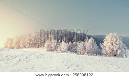 Panoramic Winter Landscape. Winter Nature With Frosty Trees. Christmas Background. Snowy Forest In M