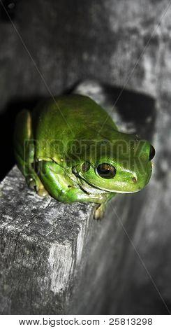 Fence Frog