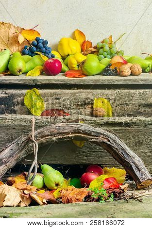 Autumnal Harvest Still Life With Apples, Pears, Grapes, Nuts And Berries In Foliage On Wooden Board