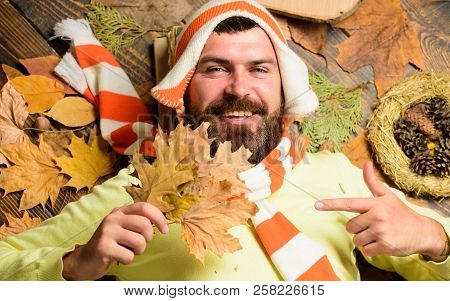 Fall And Autumn Season Concept. Man Bearded Smiling Face Lay On Wooden Background With Orange Leaves