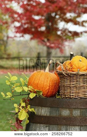 Closeup of pumpkins and gourds for autumn harvest