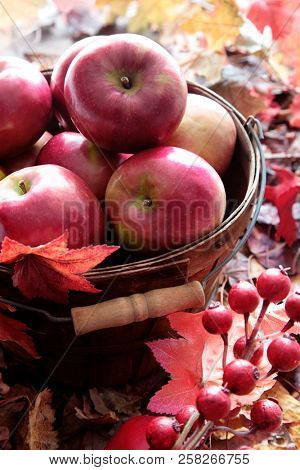 Red apples in basket with fall leaves and berries