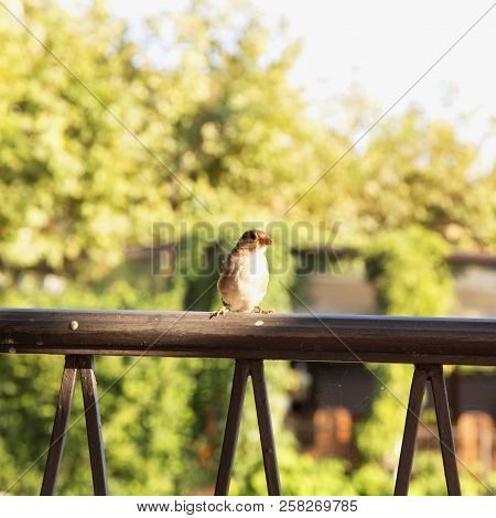 Lonely Sparrow Over Railing