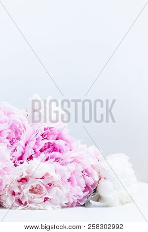 Pink Floral Background With Fresh Pink Peony Flowers And Copy Space On White Chair Leather