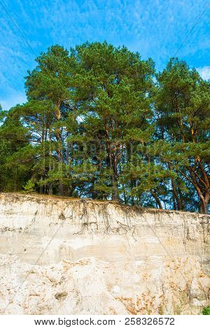 Pine Forest On The Edge Of A Sandy Cliff.