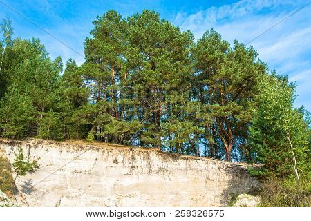Pine Forest On The Edge Of A Sandy Cliff. / Beautiful Green Pine Forest On The Edge Of A Sandy Cliff