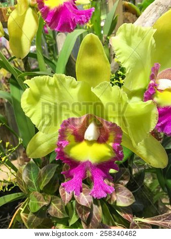 orchid flowers growing outside in tropical asian garden