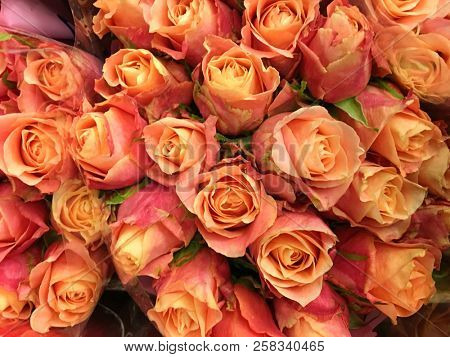 Close up Bouquet of fresh rose bright background,