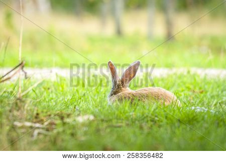 Rabbit Hiding In Green Grass In The Spring On A Bright Sunny Day At Easter