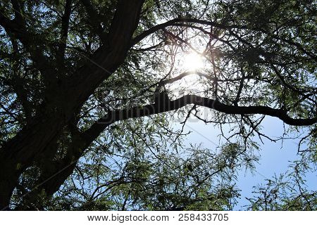 Sunlight Filters Through The Branches Of An Old Tree Somewhere In Kansas.